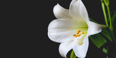 Flowers for Easter